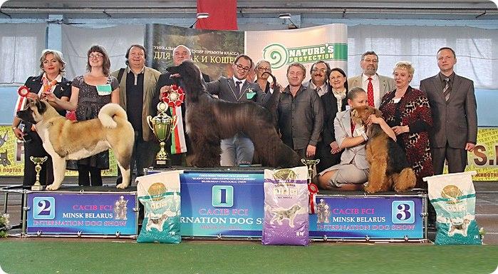 международная выставка собак CACIB в Белорусси