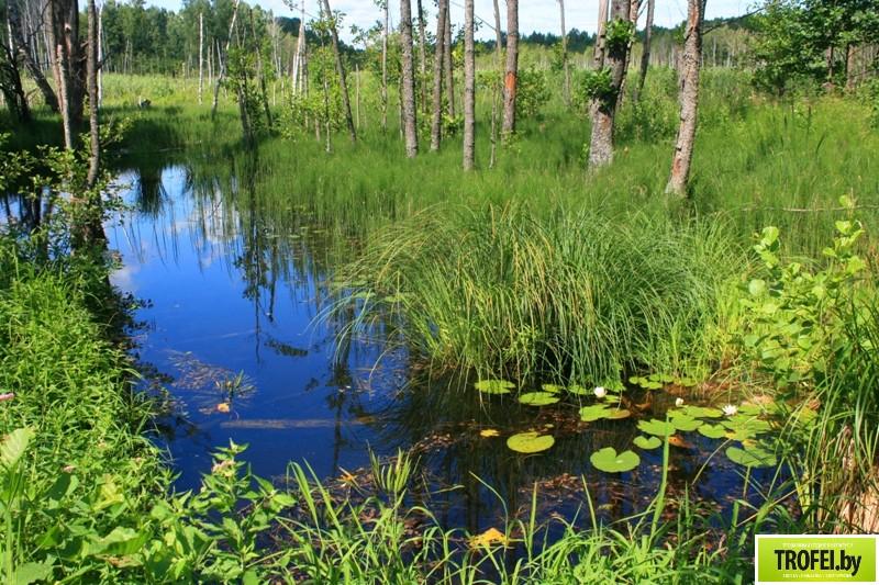 Парк редких растений