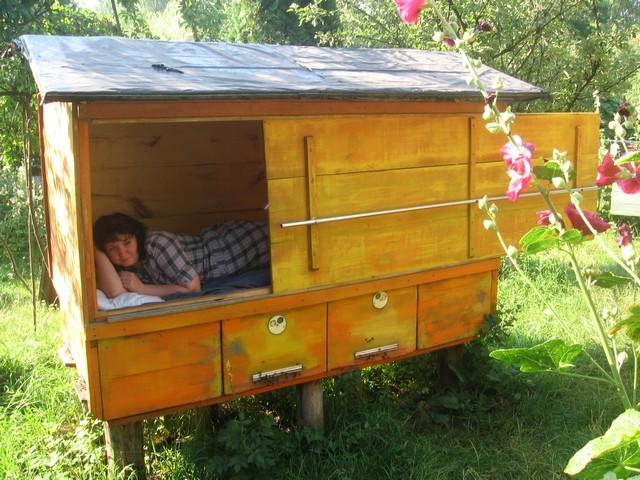 Сон с пчелами